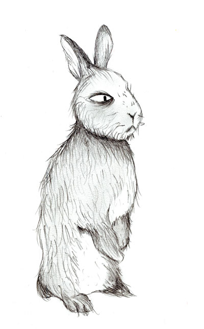 day10bunny2