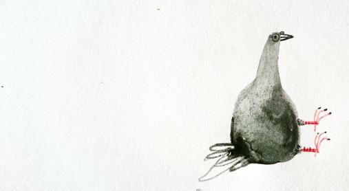 pidgeonshazelterry